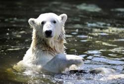 moria-orsi-polari.jpg