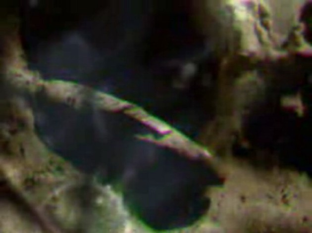 apollo20-astronave-luna-01.jpg
