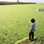 Cina: la marea verde